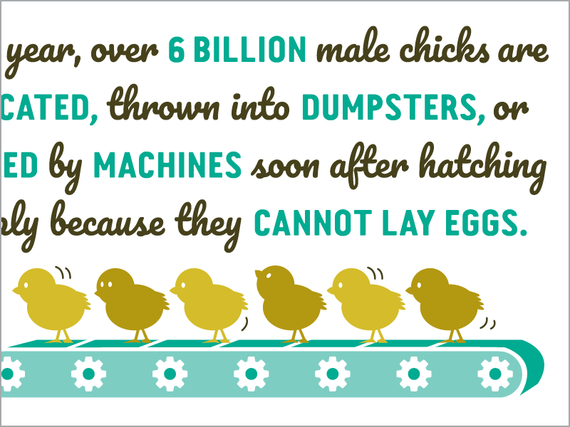 Why Go Veg? website illustration of male chicks on conveyor belt headed toward slaughter